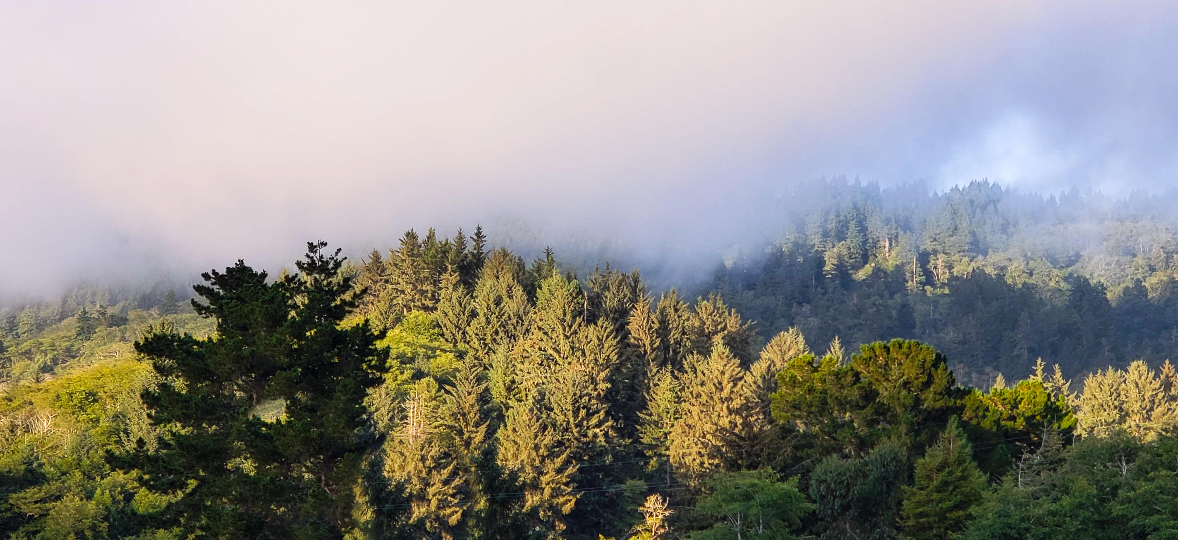 Redwoods National Park – 5 Interesting Facts