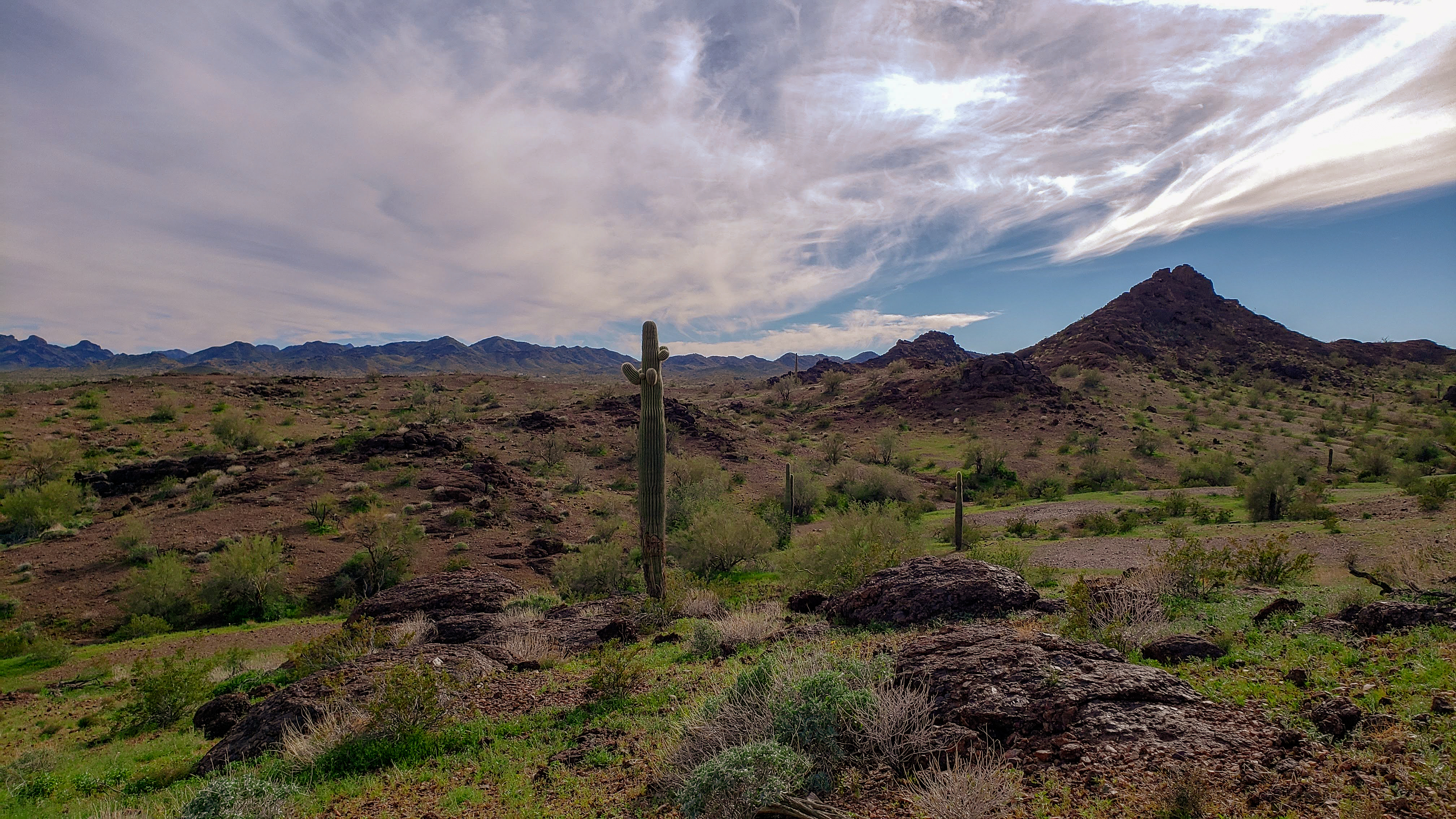 5 Things I Bet You Didn't Know - Sonoran Desert